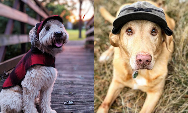 Stormy Kromer February Featured Pets