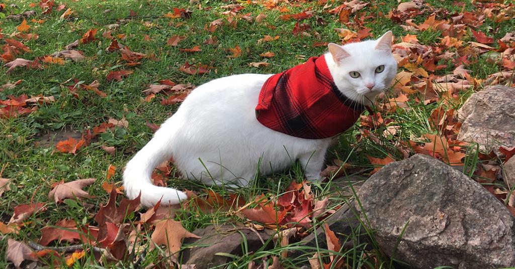 Stormy Kromer November Pet
